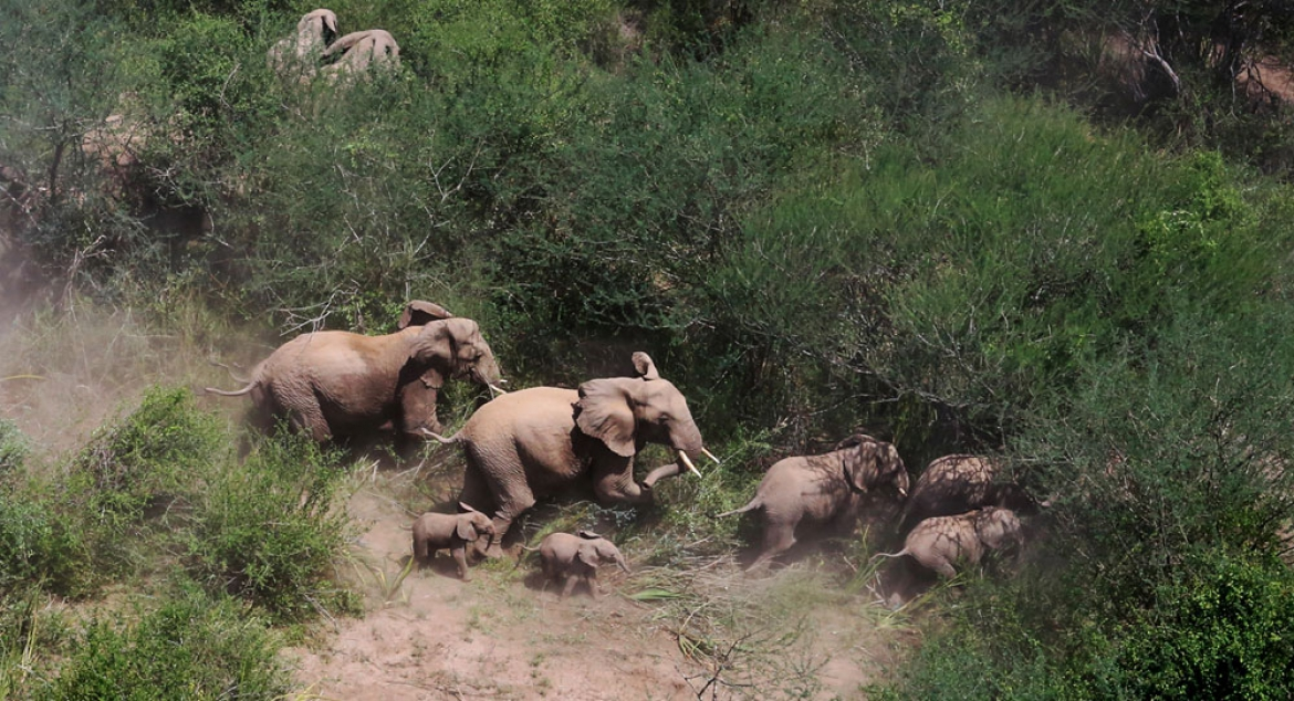 Special Tour Itinerary on Elephants